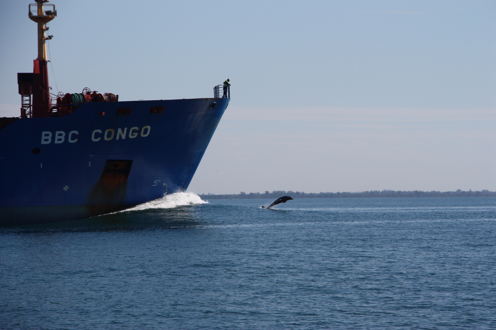 Dolphins playing on the bow wave of the tanker