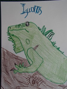 Matthew's iguana, again from an internet picture, minimal help from Mom.